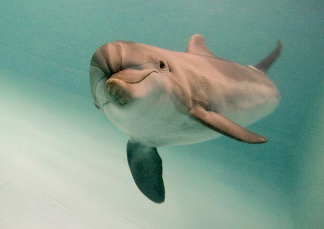 Un delfino