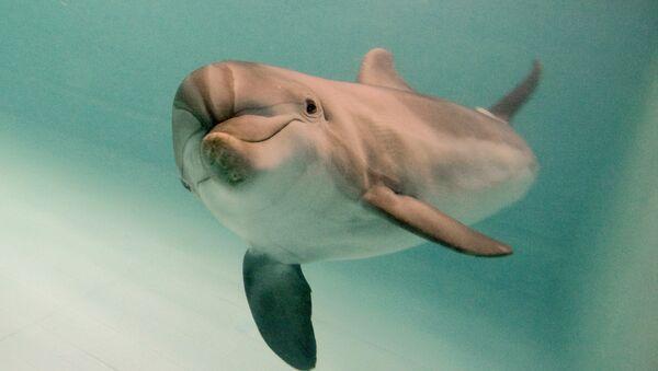 Un delfino - Sputnik Italia