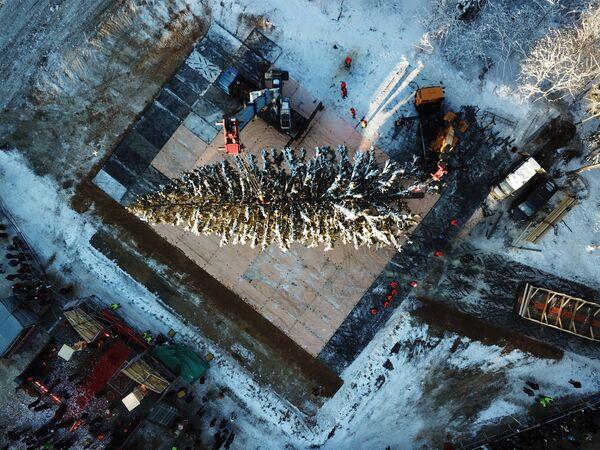 Taglio dell'albero di Natale principale russo. - Sputnik Italia