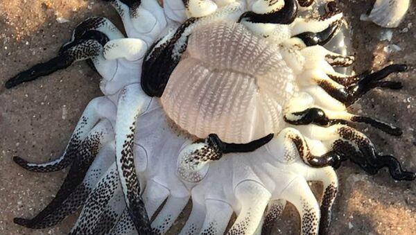 Обнаруженное морское существо в  Западной Австралии - Sputnik Italia