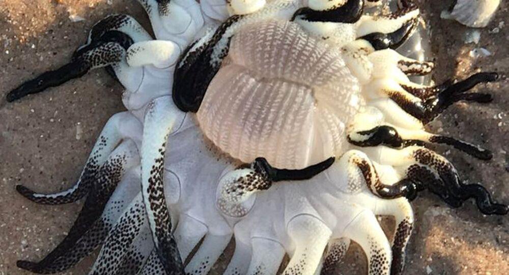 Mostro marino di Broome, Australia