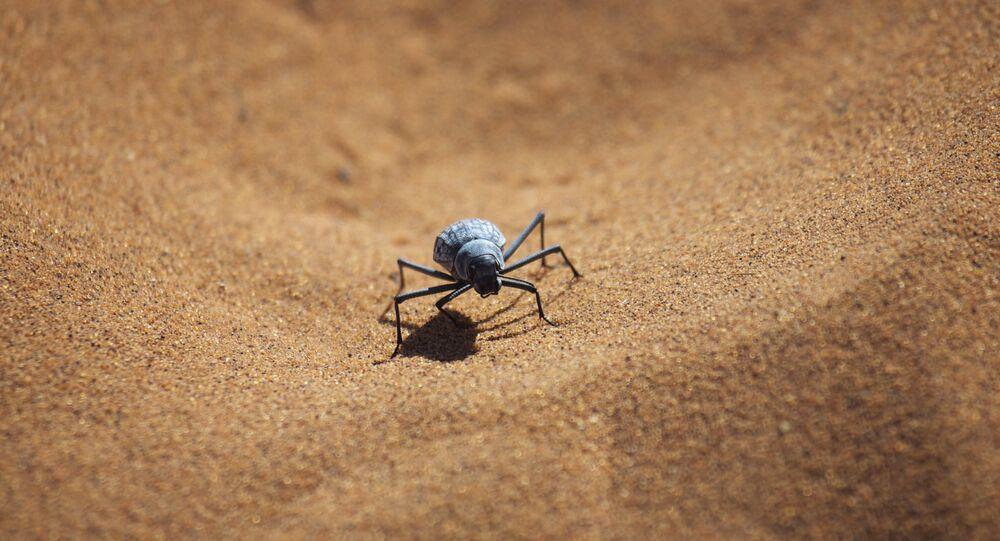Uno scarabeo nel deserto della Namibia