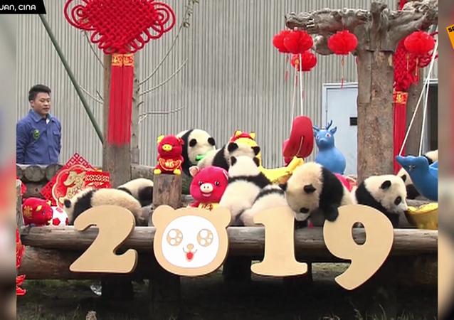 Capodanno cinese con i panda