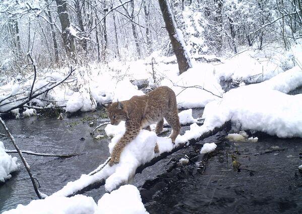 Nature's Revenge: Wildlife in the Chernobyl Exclusion Zone - Sputnik Italia