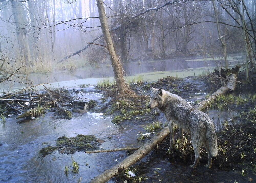 Chernobyl, dove la natura si è ripresa tutto quello che era suo