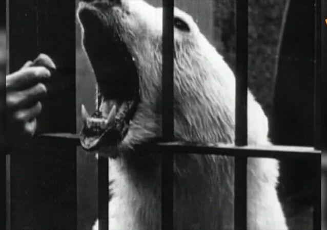 Lo zoo di Mosca compie 115 anni