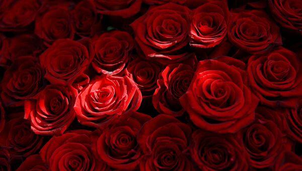 rose rosse - Sputnik Italia
