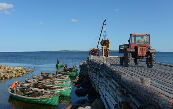 Raccolta della laminarie al porto di Rebolda sull'isola grande - Sputnik Italia