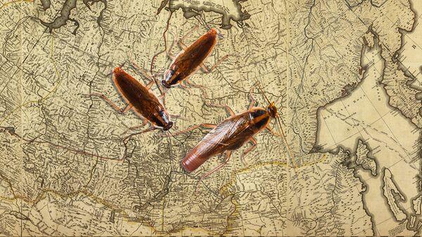 Gli scarafaggi - Sputnik Italia