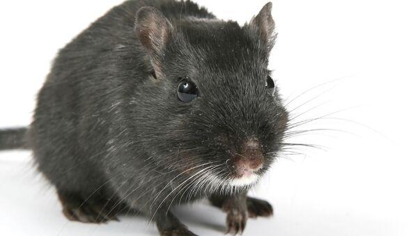 Mouse - Sputnik Italia