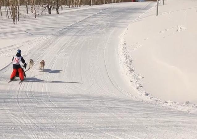 Andiamo sulla slitta trainata dai cani!