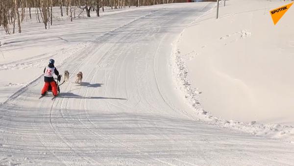 Andiamo sulla slitta trainata dai cani! - Sputnik Italia