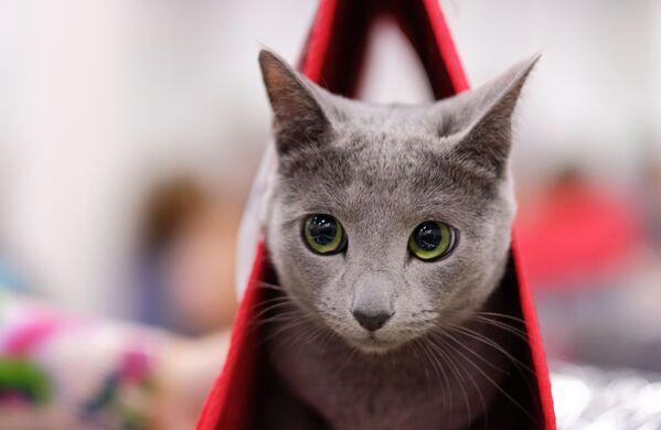 Il gatto perfetto - Sputnik Italia