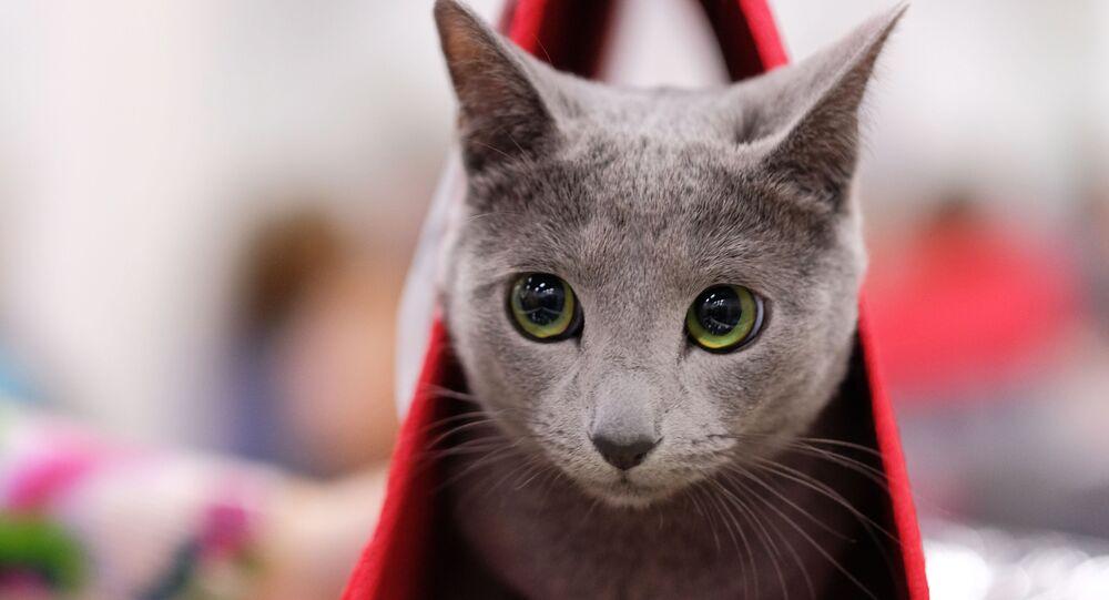 Il gatto perfetto