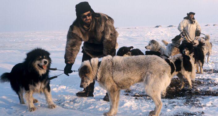 Cani da slitta e guardiani del parco (1970)
