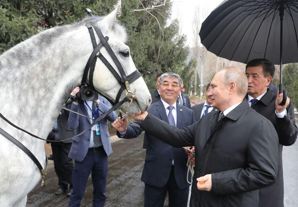 28 marzo 2019 - il presidente Putin con il cavallo di razza Orlov donatogli dal presidente del Kyrgyzstan Sooronbay Zheenbekov