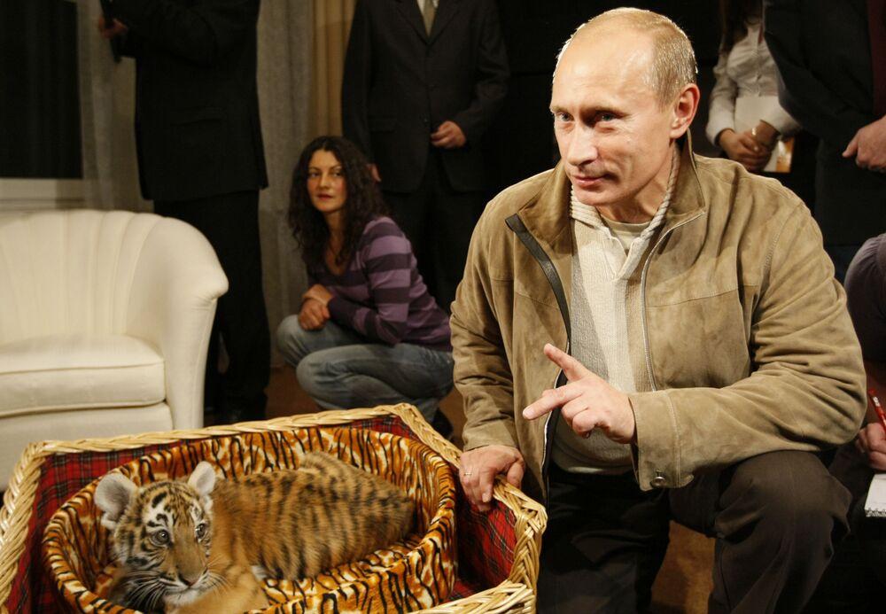 9 ottobre 2008, per il suo 56° compleanno Vladimir Putin riceve in regalo un cucciolo di tigre siberiana