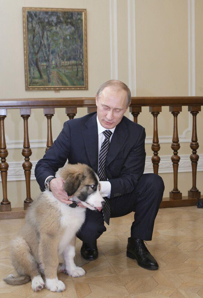 9 dicembre 2010, l'allora primo ministro russo Vladimir Putin nella sua residenza di Novo-Ogarevo con il suo cane Buffy