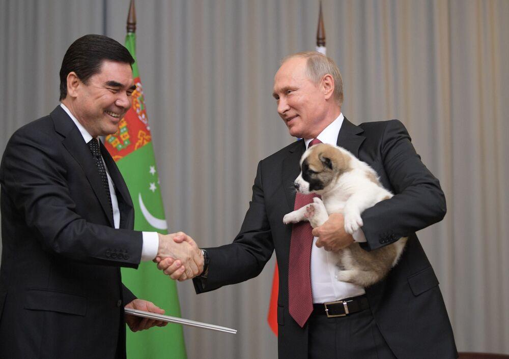 11 ottobre 2017, il presidente russo Putin stringe la mano al presidente del Turkmenistan Gurbanguly Berdymukhamedov e regge nel braccio sinistro il cucciolo di pastore dell'Asia Centrale ricevuto come regalo di compleannno durante la visita nella capitale turkmena Ashgabat