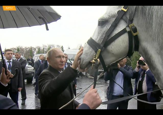 Nuovi animali di Putin