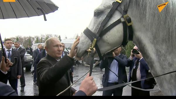 Nuovi animali di Putin - Sputnik Italia