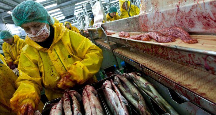Isola Iturup, lavorazioni ittiche