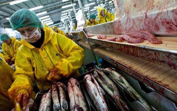 Isola Iturup, lavorazioni ittiche - Sputnik Italia