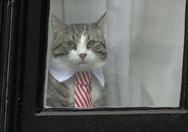 Il gatto di Assange