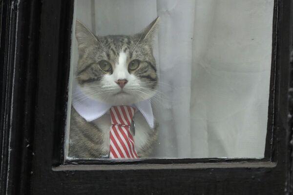Il gatto di Assange - Sputnik Italia