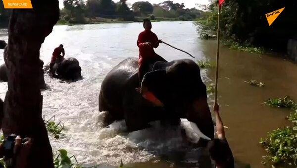 Le gare di elefanti in Thailandia - Sputnik Italia
