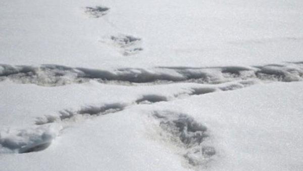 India, i militari trovano tracce dello yeti sull'Himalaya - Sputnik Italia