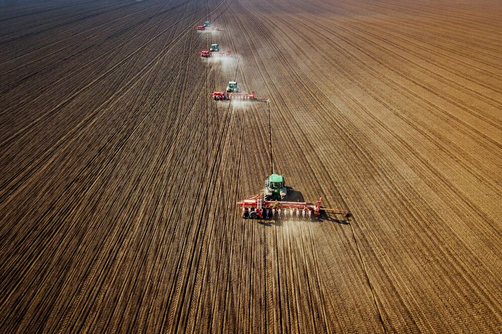 La semina del girasole nel territorio di Krasnodar.