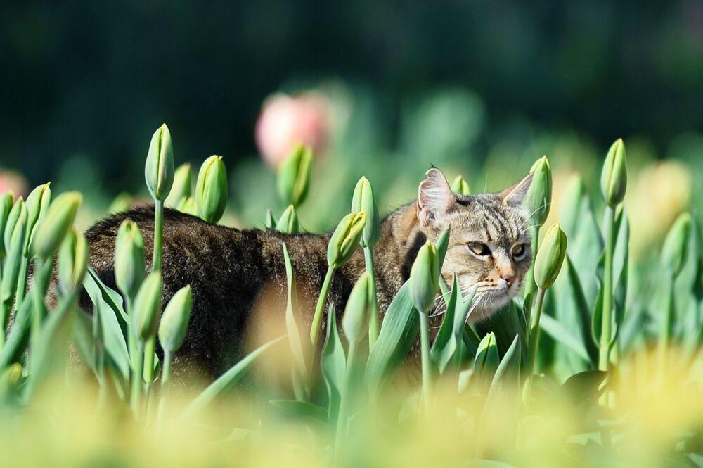 Un gatto-residente del giardino botanico in Crimea