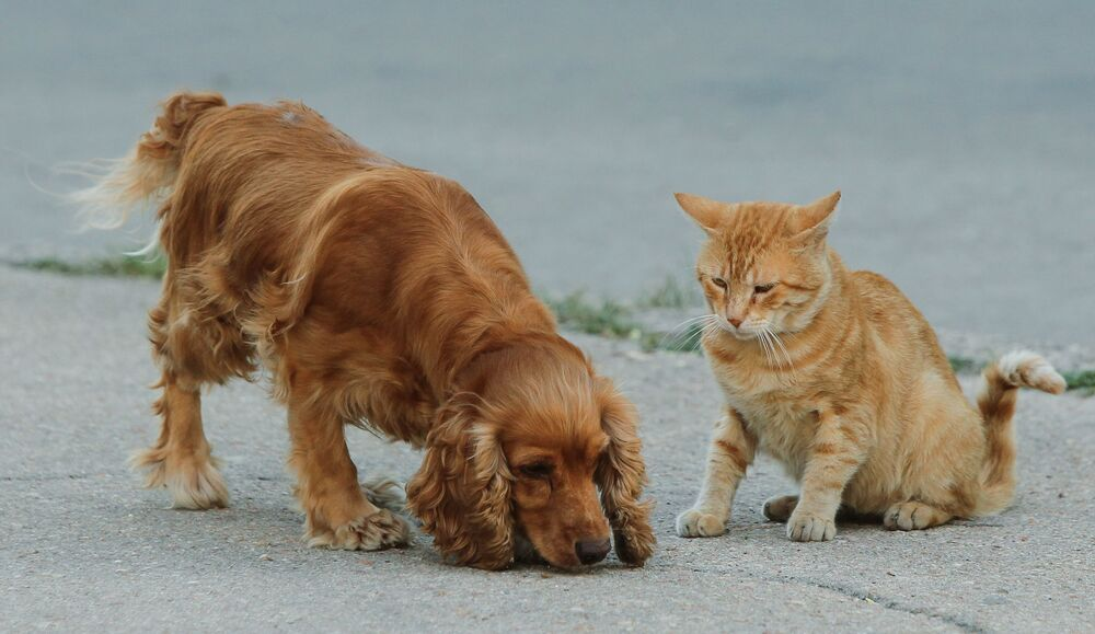 Cane e gatto possono essere amici