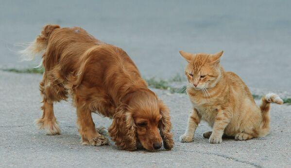 Cane e gatto possono essere amici - Sputnik Italia