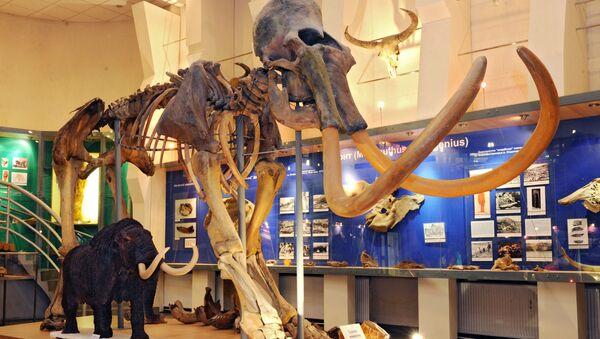 Lo scheletro di un mammoth - Sputnik Italia