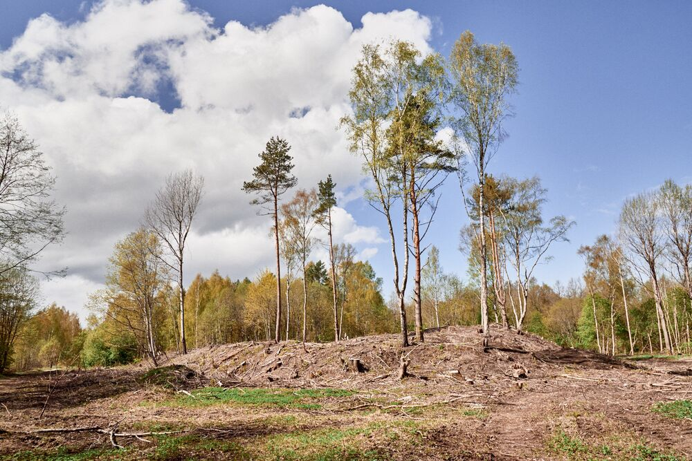 In alcuni punti del bosco gli alberi sono stati abbattuti