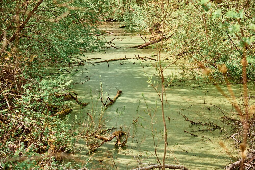 Nel territorio di Astangu è pieno di stagni e laghetti con acqua morta