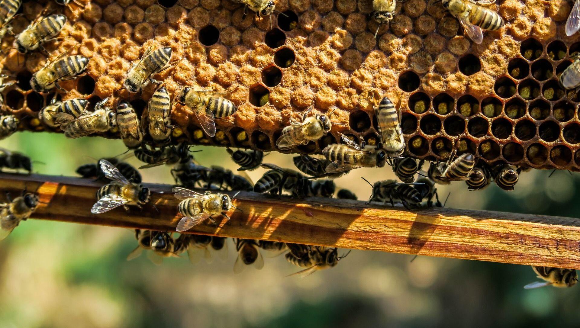 Le api - Sputnik Italia, 1920, 18.05.2021