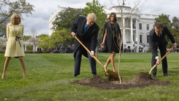 La quercia piantata dal presidente degli Stati Uniti, Donald Trump, insime al capo dello stato francese, Emmanuel Macron, alla Casa Bianca - Sputnik Italia