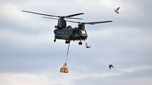 Elicottero delle Forze militari della Germania - Sputnik Italia
