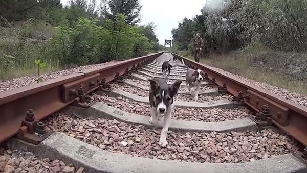 Cuccioli - Sputnik Italia