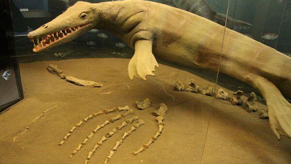 Canada, trovati i resti fossilizzati di un mosasauro - Sputnik Italia