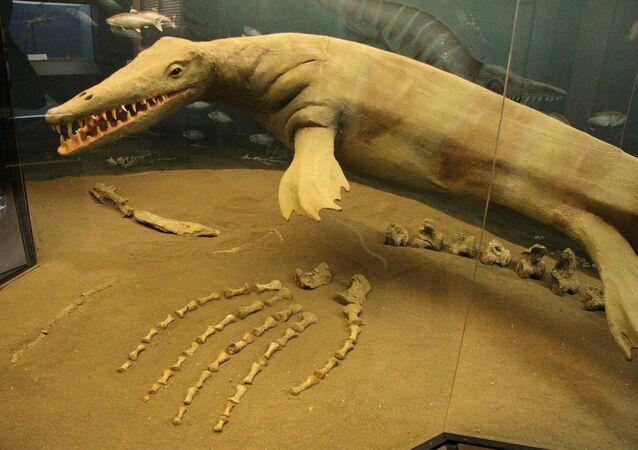 Canada, trovati i resti fossilizzati di un mosasauro