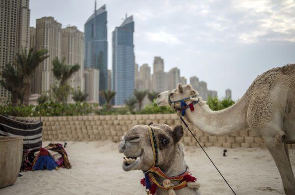 6° posto: Dubai, Emirati Arabi Uniti - Sputnik Italia