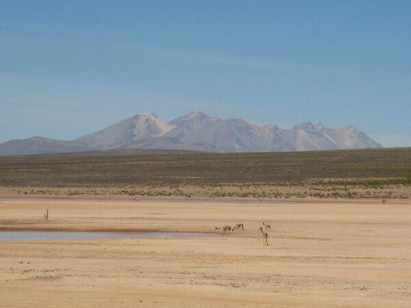 L'Altiplano, le Ande centrali. - Sputnik Italia