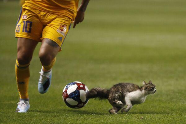 Un gatto ha fatto irruzione in campo durante una partita dell'MLS americana. - Sputnik Italia