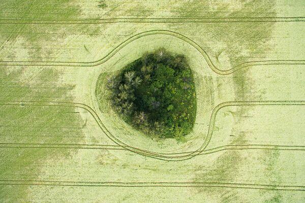 Fioritura in corso al campo di grano saraceno in Siberia. - Sputnik Italia