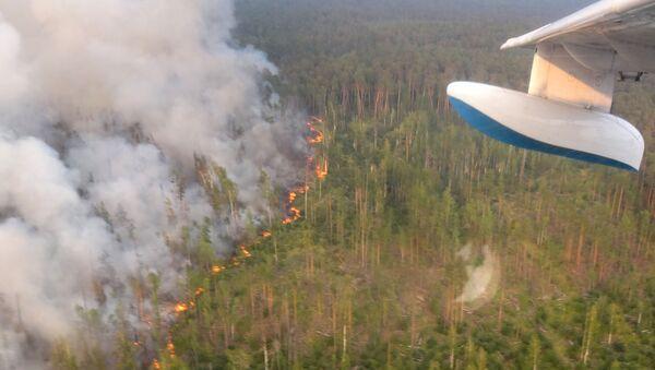 Incendi boschivi nel territorio di Krasnoyarsk - Sputnik Italia