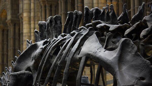 Scheletro di dinosauro in museo - Sputnik Italia